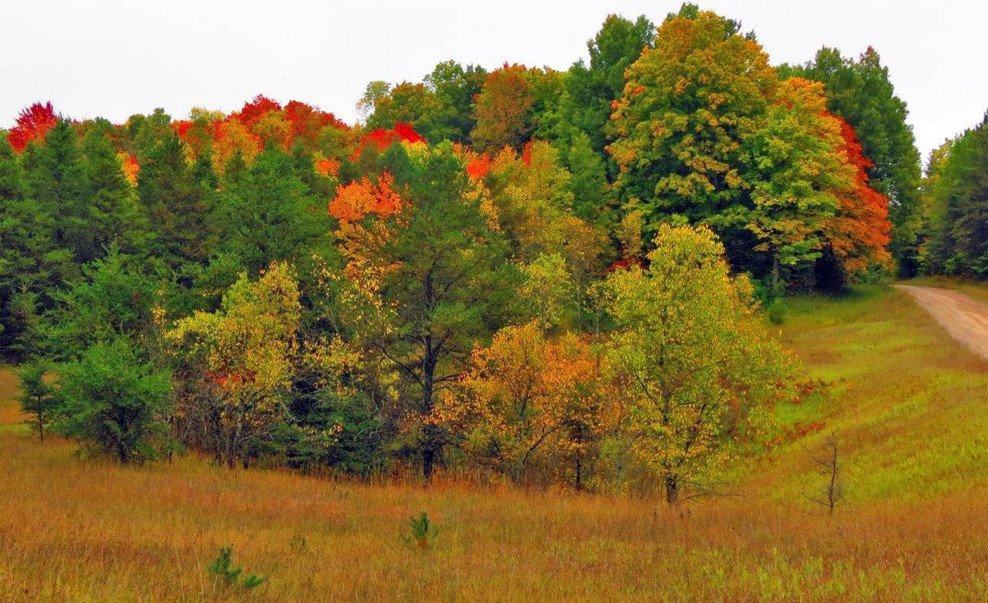 Huron Manistee National Forest Fall ColorsFall Colors