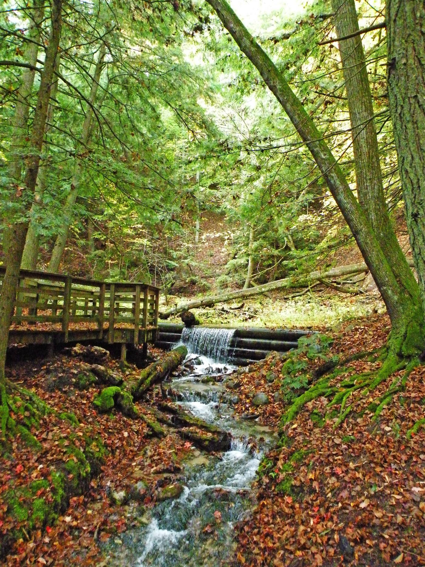 Huron Manistee National ForestForest Path