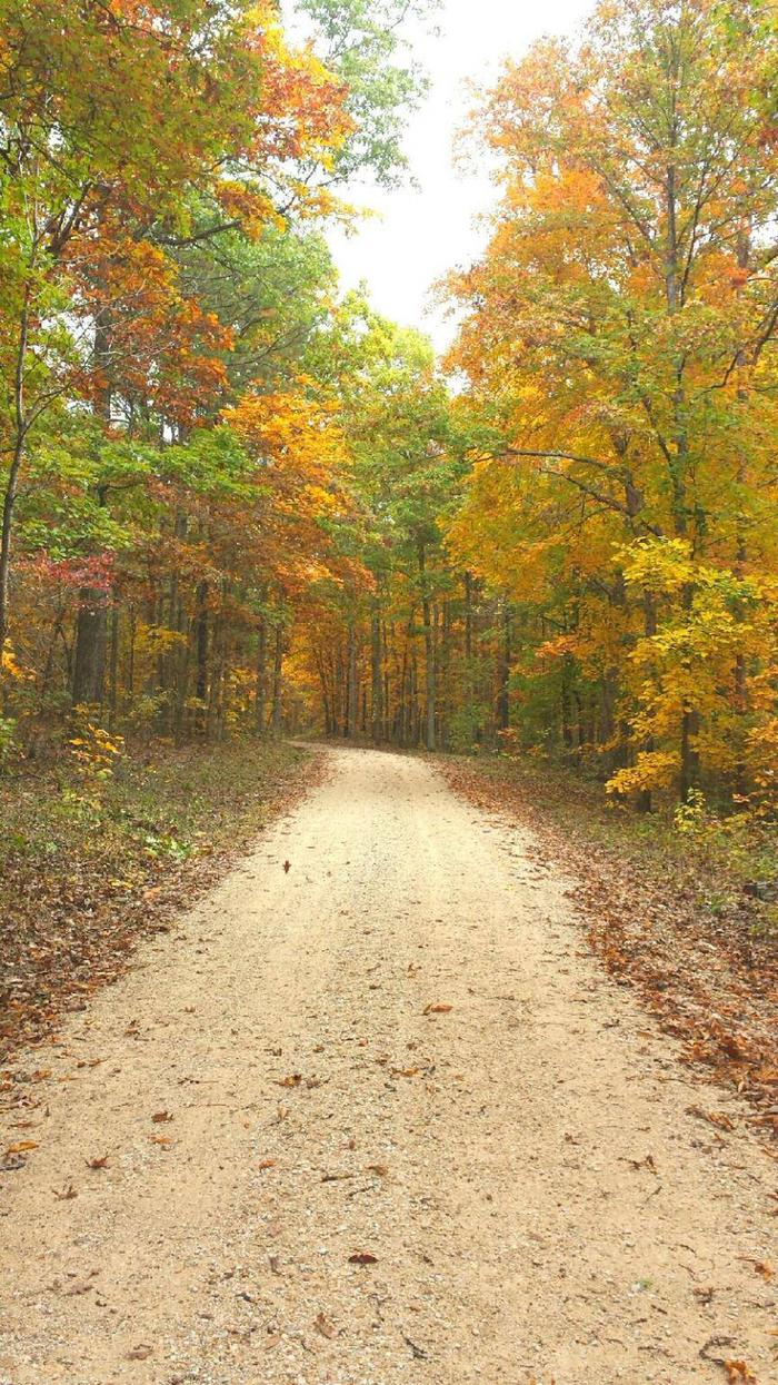 Fall Colors along Forest Road