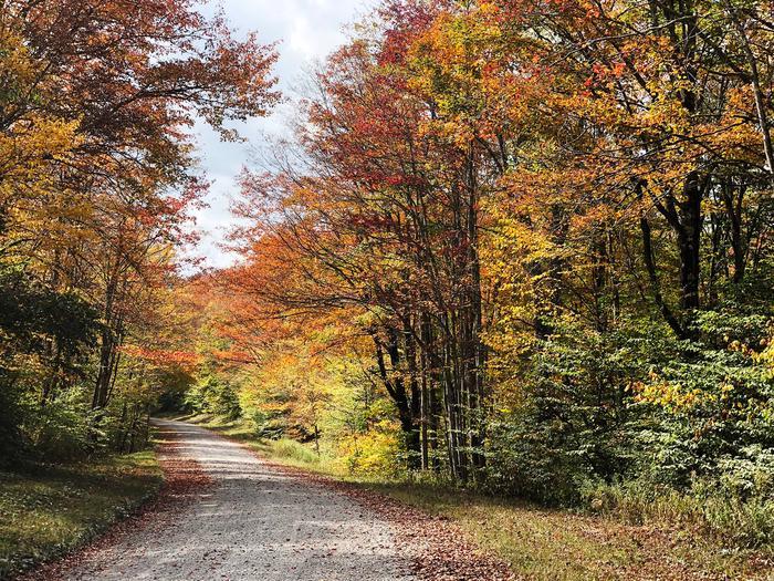Monongahela National ForestFall colors