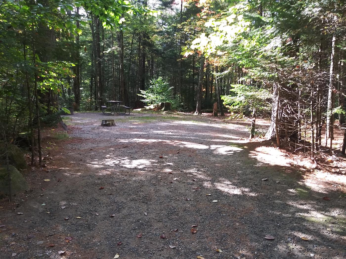 A large wooded tent site 20 ft. Depth