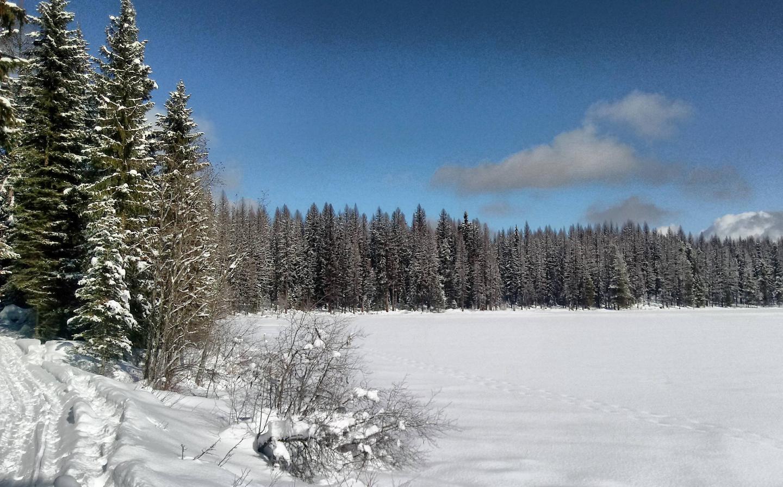 Colvilla National ForestColvilla National Forest Winter
