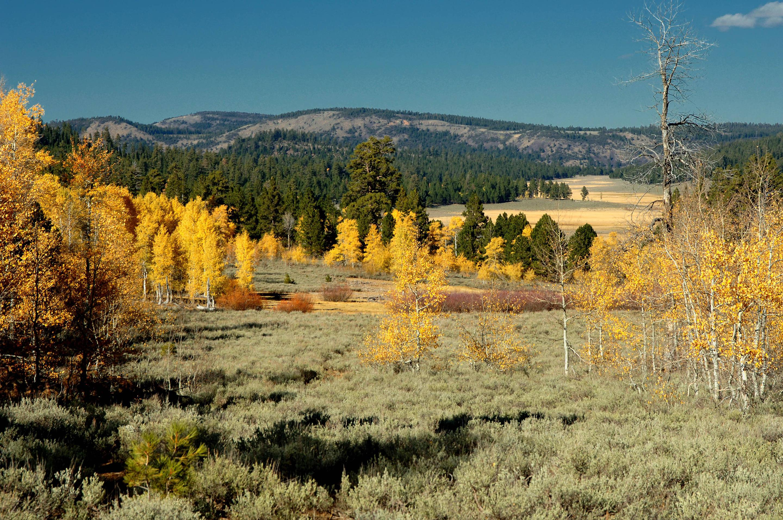 Freemont - Winema National Forest Bull Prairie
