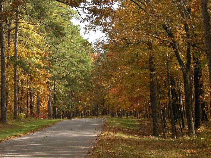 National Forest in Mississippi