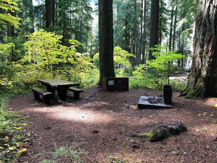 Ohanapecosh Campground - Site A010