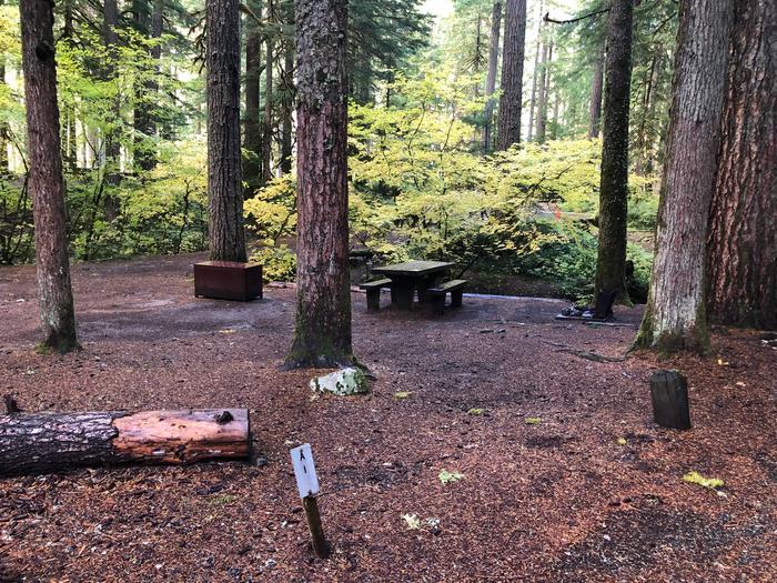 Ohanapecosh Campground - Site A001