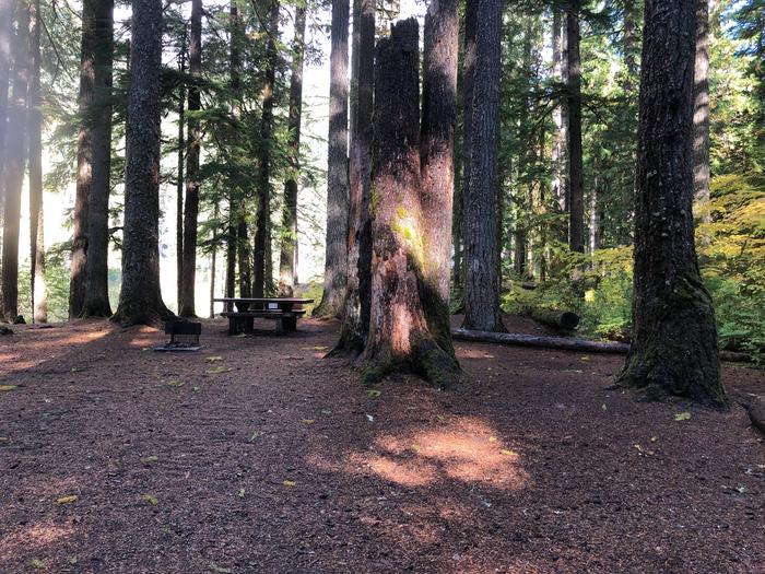 Ohanapecosh Campground - Site A005