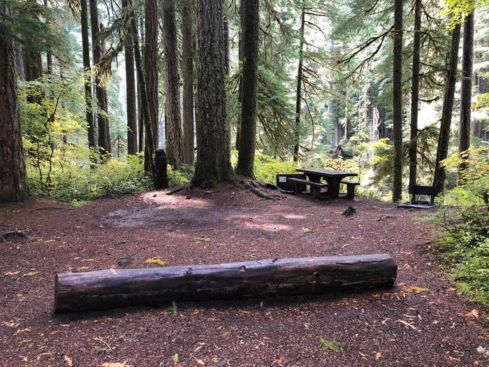 Ohanapecosh Campground - Site A021