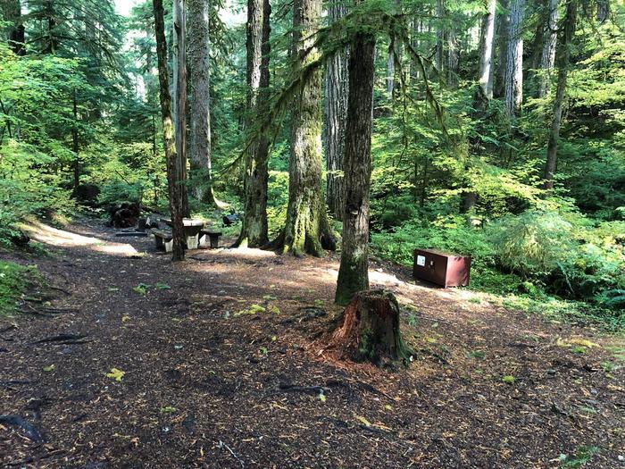Ohanapecosh Campground - Site A025
