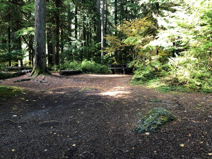 Ohanapecosh Campground - Site A026