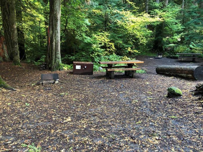Ohanapecosh Campground - Site A028