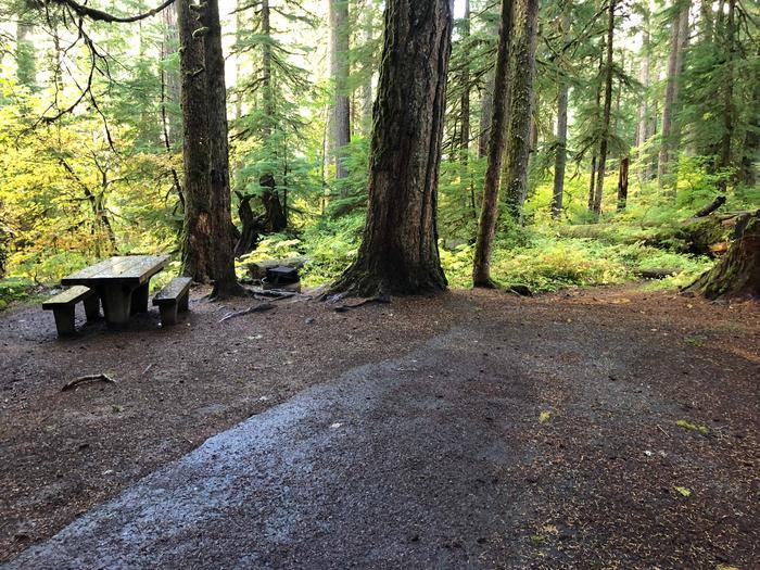 Ohanapecosh Campground - Site B009