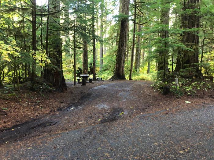 Ohanapecosh Campground - Site B009 Parking Area