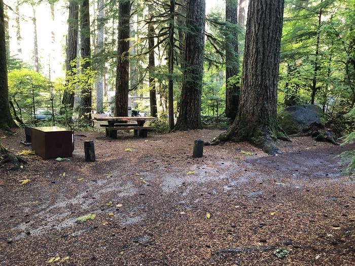 Ohanapecosh Campground - Site B010