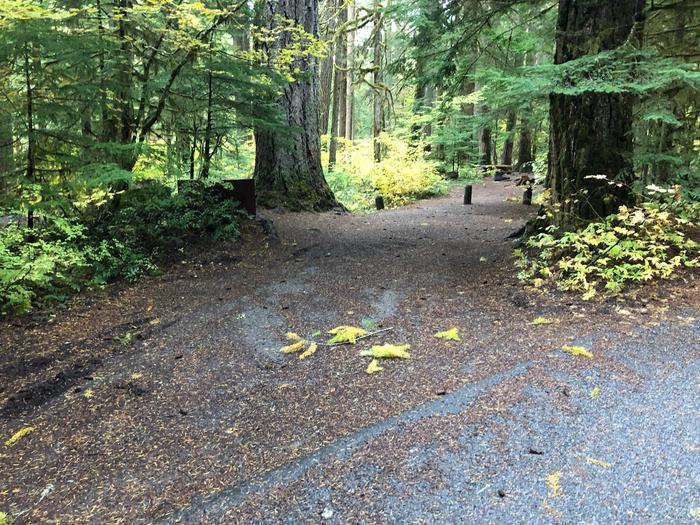 Ohanapecosh Campground - Site B008 Parking Area