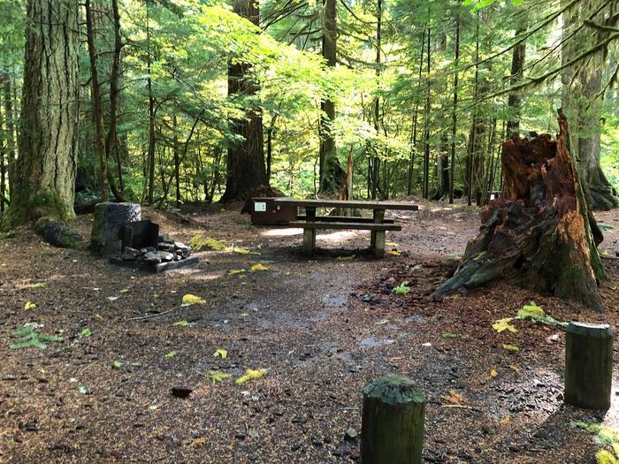 Ohanapecosh Campground - Site A031