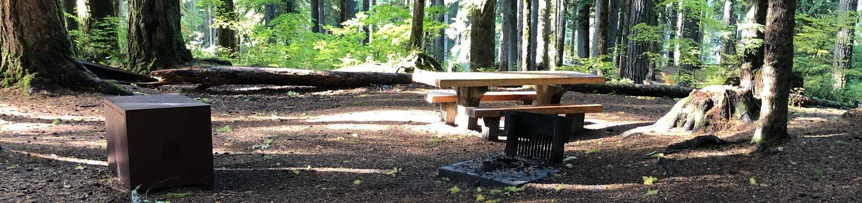 Ohanapecosh Campground - Site A032