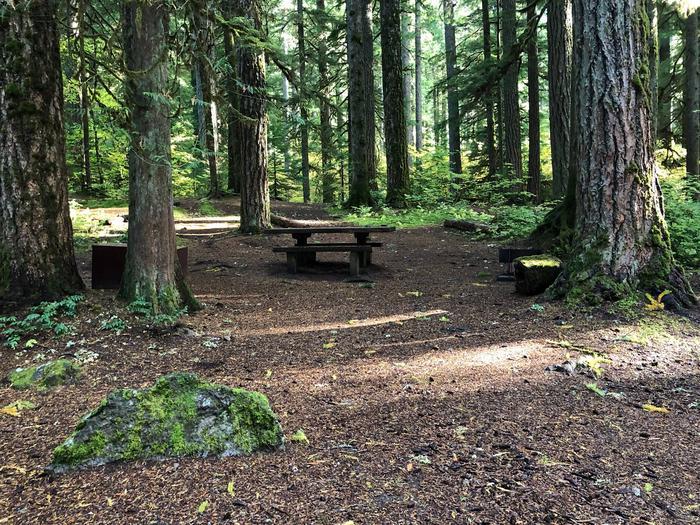 Ohanapecosh Campground - Site A046