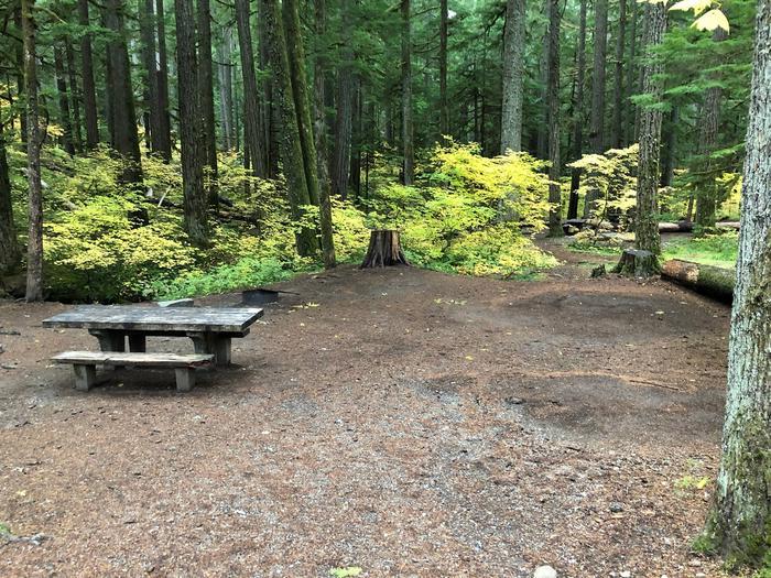 Ohanapecosh Campground - Site C005