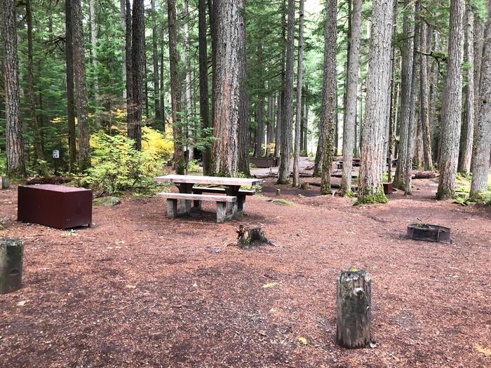 Ohanapecosh Campground - Site C007