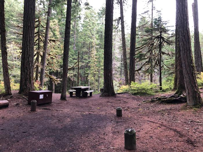 Ohanapecosh Campground - Site C008