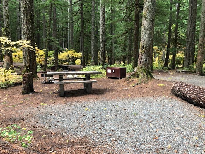 Ohanapecosh Campground - Site C009