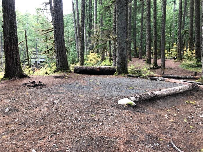 Ohanapecosh Campground - Site C010 Tent Space