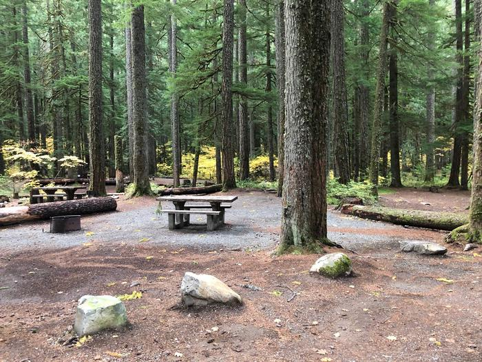 Ohanapecosh Campground - Site C012