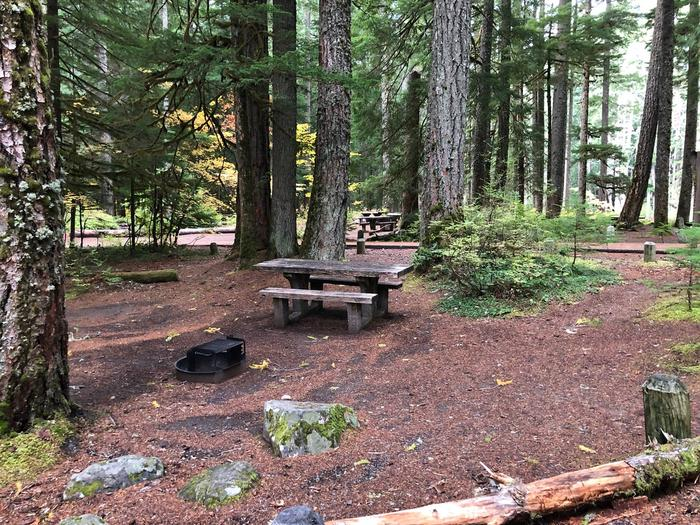 Ohanapecosh Campground - Site C014