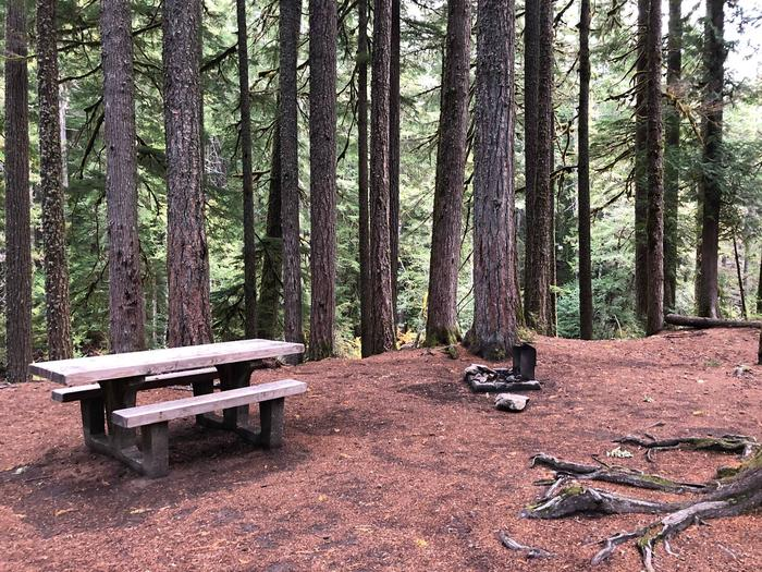 Ohanapecosh Campground - Site C015