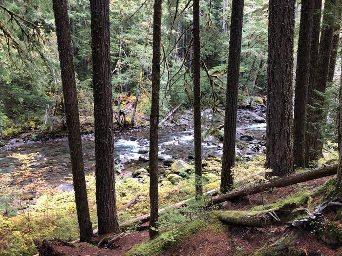 The Ohanapecosh River flows behind site C015.