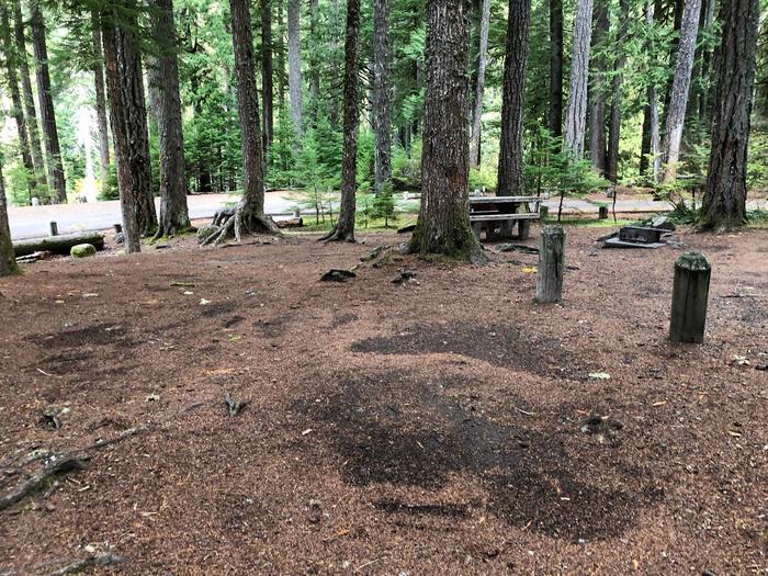 Ohanapecosh Campground - Site C016