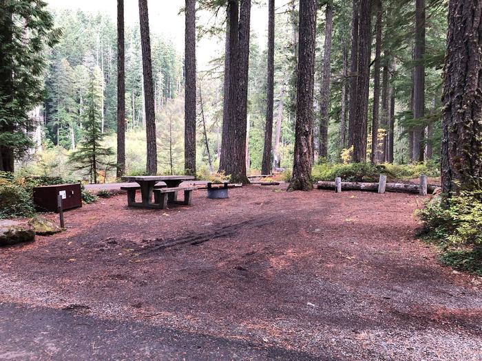 Ohanapecosh Campground - Site C024