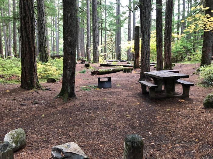 Ohanapecosh Campground - Site C029