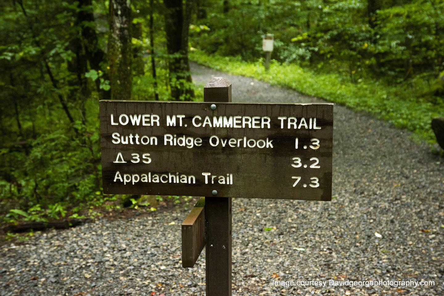 Lower Mount Cammerer trail head Also accessible from Cosby is Low gap, Gabe's mountain trail, Snake Den ridge, horse trail, nature trail, and Hen Wallow Falls.