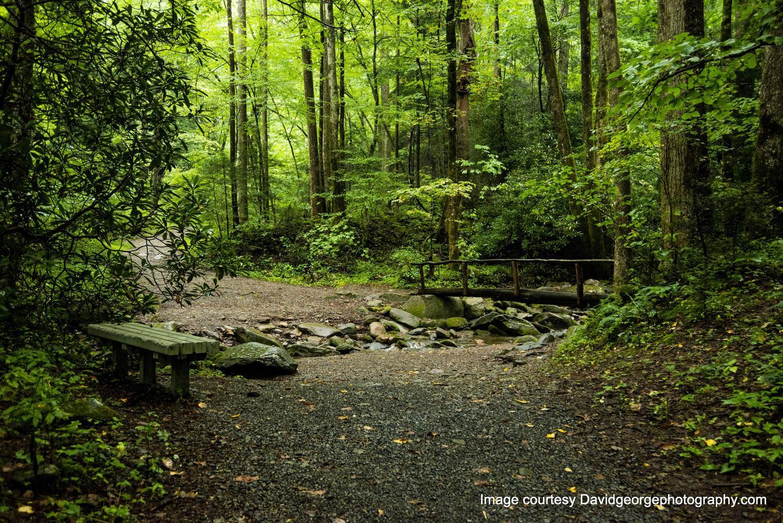 Bench and footbridge on trail to Sutton Ridge.