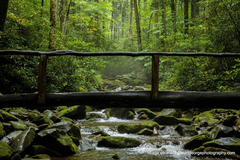 Footbridge over Cosby Creek