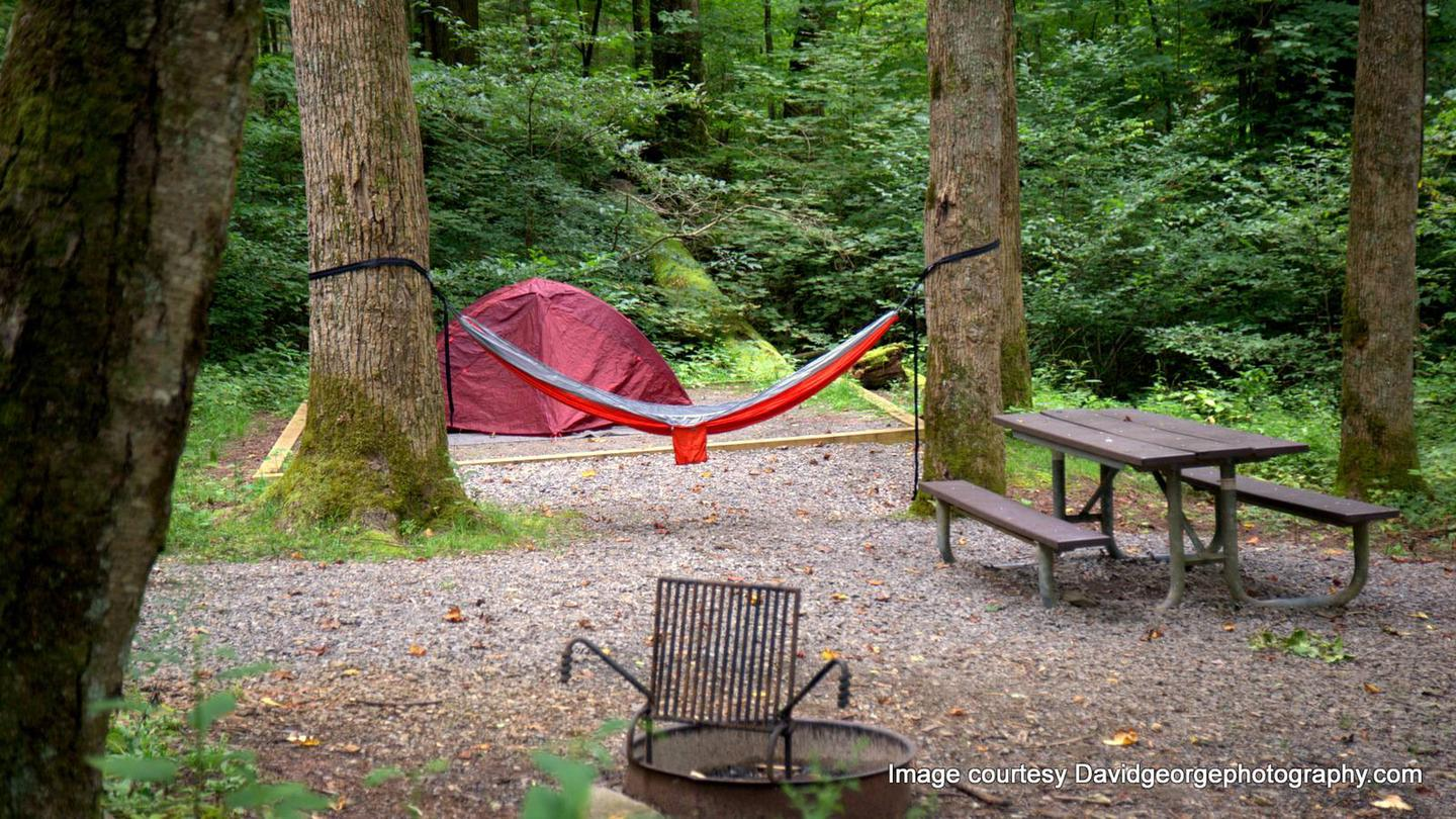 Hammocks at CosbyCosby is deeply wooded. Many trees within your sites perimeter allows for hammock camping.