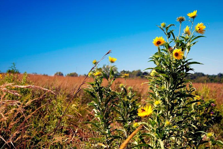 George Washington Carver NM PrairiePrairie at George Washington Carver NM with sunflowers.