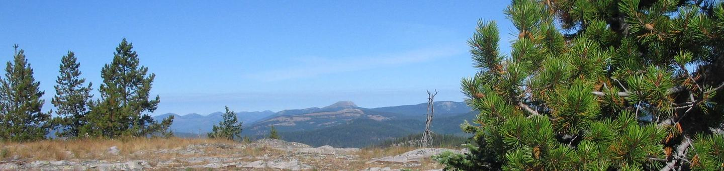 View from the top of Big Creek Baldy Mountain
