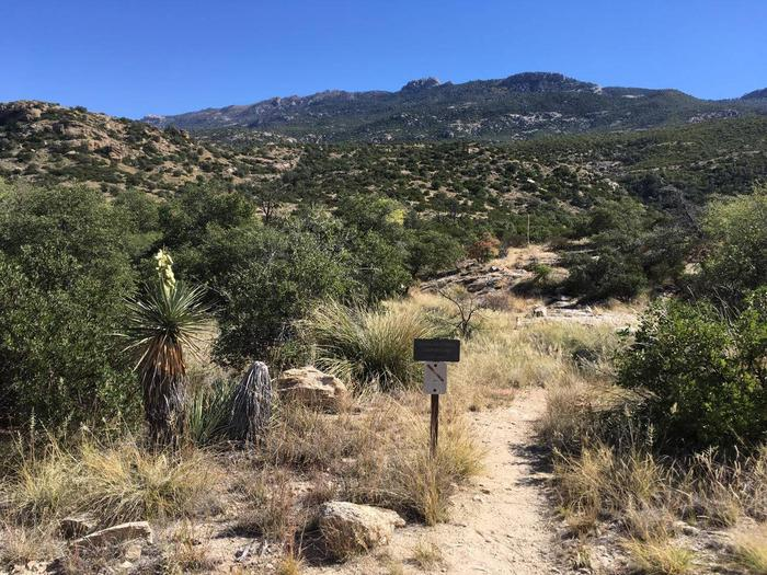 Trail to Douglas Springs Campground, Saguaro National Park Wilderness
