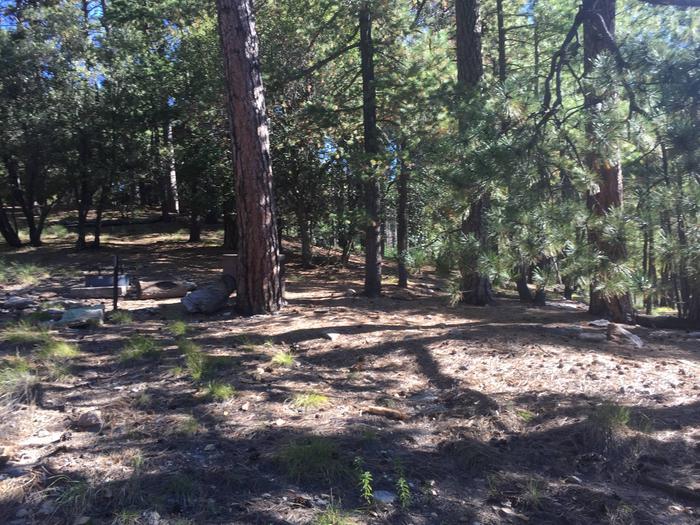 Manning Campsite