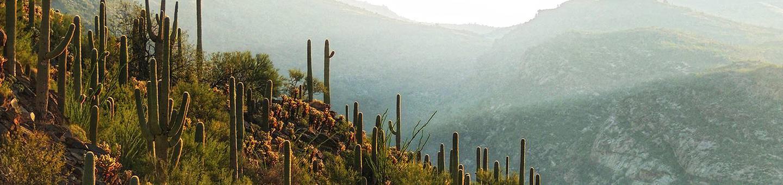 Rincon Mountains, Saguaro Wilderness