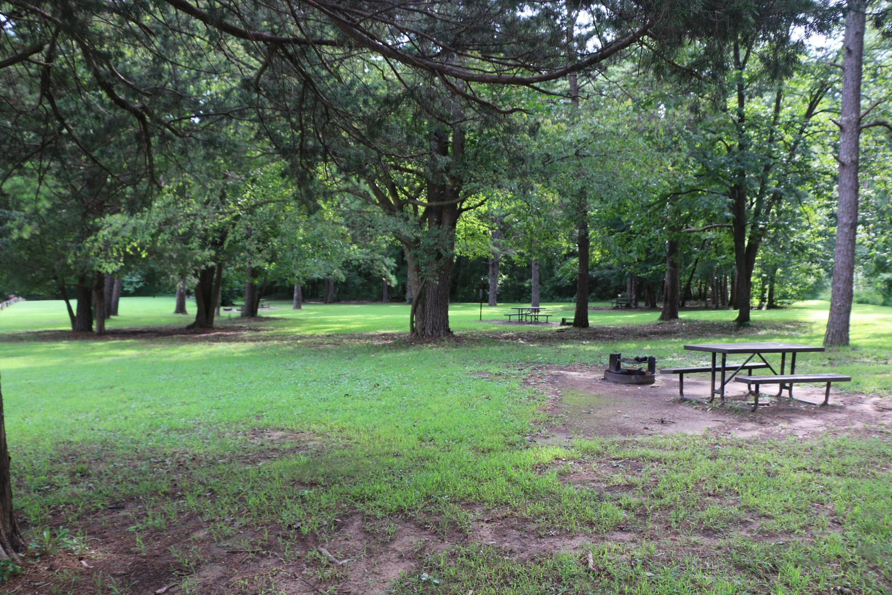 Shady tent camp sites at Kyle's LandingSeveral tent sites are available with ample shade for campers.