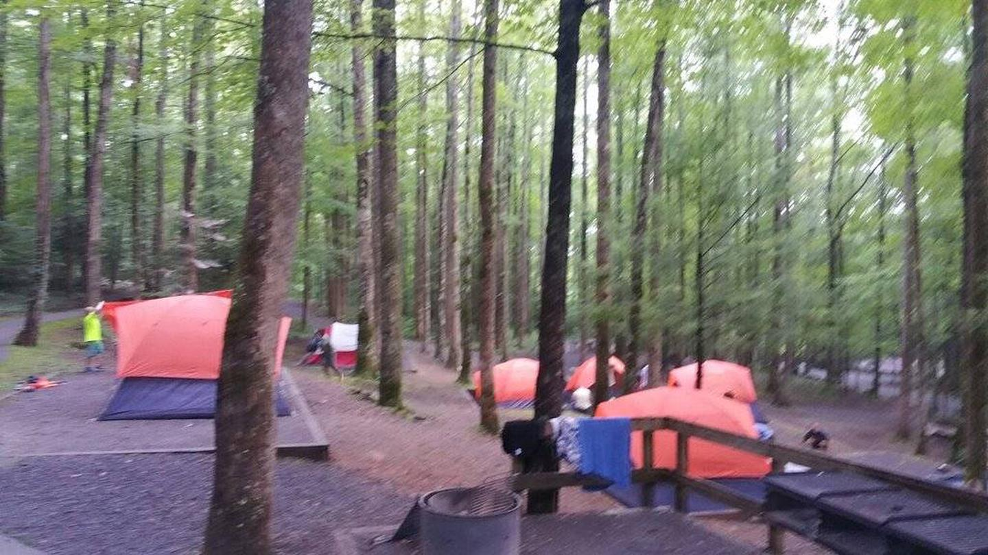 Group site 03Boy Scouts tent camping