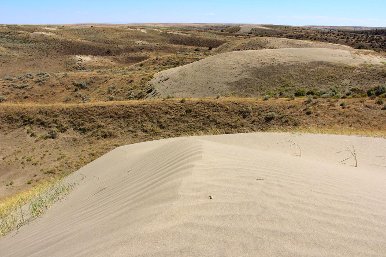 On the Juniper DunesOn the Juniper Dunes