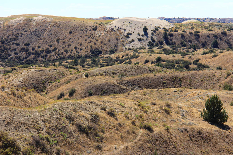 Juniper Dunes Wilderness Landscape