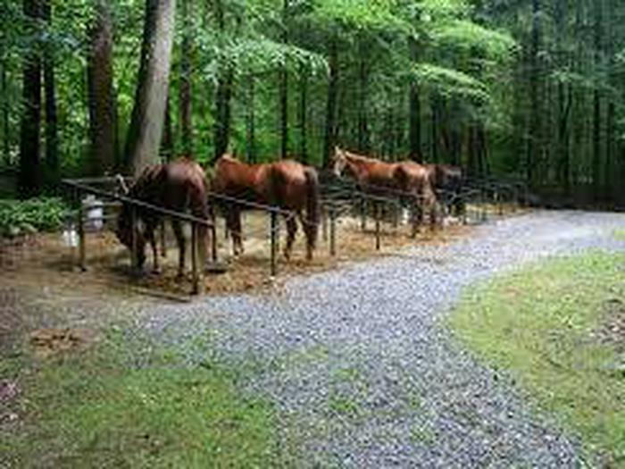 Preview photo of Big Creek Horse Camp