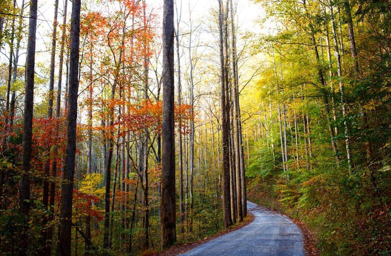 BC RoadBig Creek Park Road