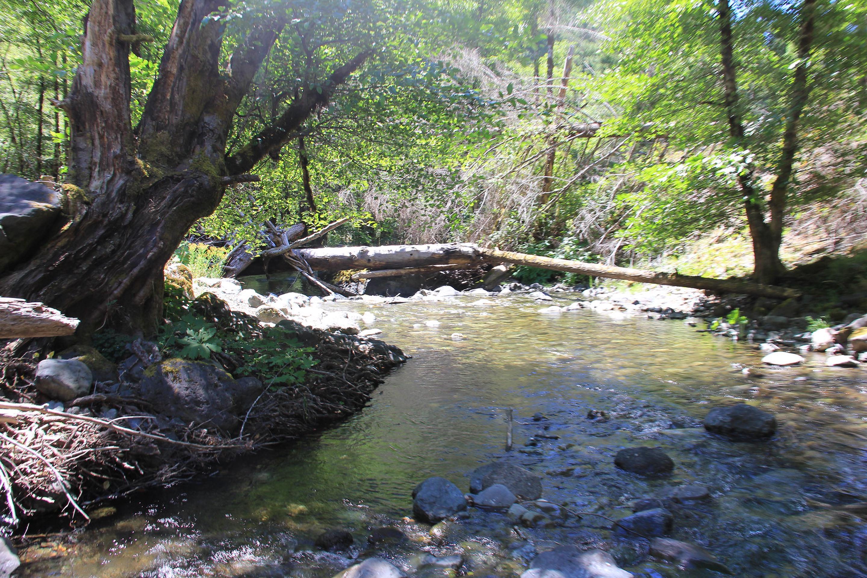 Mule Creek in July 2013Mule Creek in July 2013